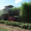 industrial-hemp-farming