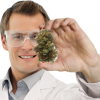 Hempioneers - Study shows Vaporizers can be healthy alternative to smoking cannabis